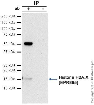 Immunoprecipitation - Anti-Histone H2A.X antibody [EPR895] - BSA and Azide free (ab217838)
