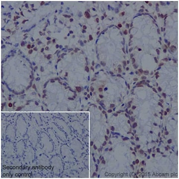 Immunohistochemistry (Formalin/PFA-fixed paraffin-embedded sections) - Anti-Histone H2A antibody [EPR17470] - BSA and Azide free (ab217840)