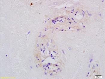 Immunohistochemistry (Formalin/PFA-fixed paraffin-embedded sections) - Anti-MFSD2A/NLS1 antibody (ab217970)