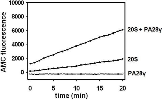 ELISA - Native Cow 20S Immunoproteasome protein (ab218003)