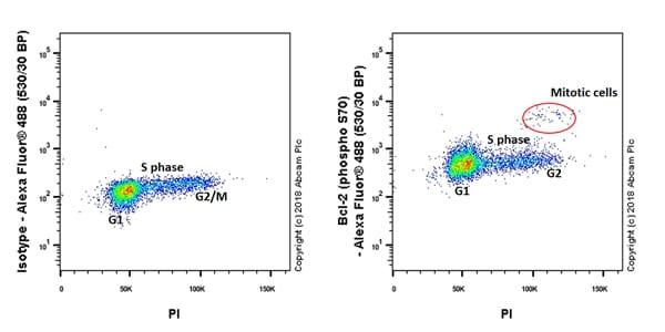 Flow Cytometry - Anti-Bcl-2 (phospho S70) antibody [EPR21162] (ab218123)
