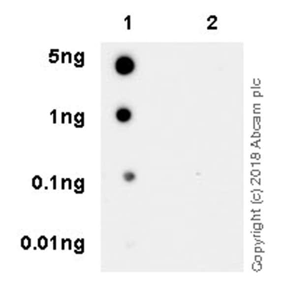 Dot Blot - Anti-Bcl-2 (phospho S70) antibody [EPR21162] (ab218123)