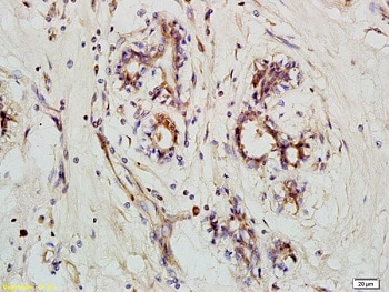 Immunohistochemistry (Formalin/PFA-fixed paraffin-embedded sections) - Anti-NLRX1 antibody (ab218252)