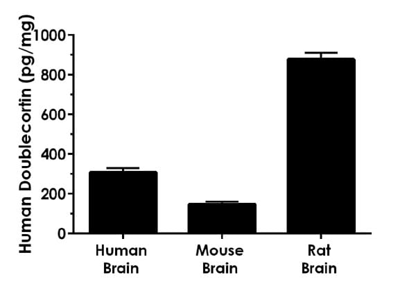Other species reactivity was determined by measuring various species adult brain tissue extract samples.