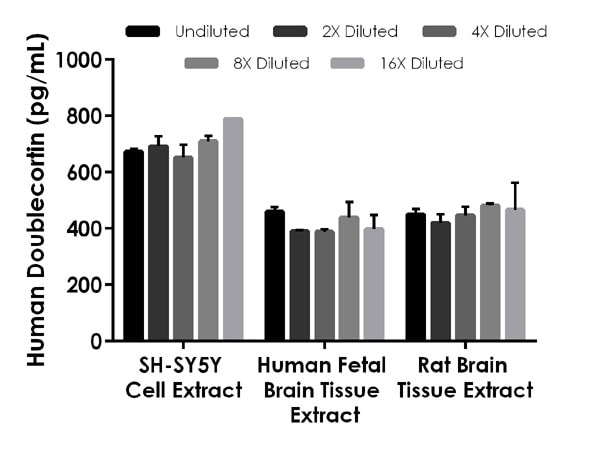 Interpolated concentrations of native Doublecortin in SH-SY5Y cell extract, human fetal brain tissue extract and rat brain tissue extract.