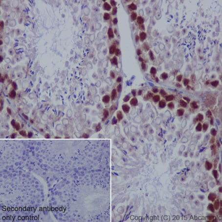 Immunohistochemistry (Formalin/PFA-fixed paraffin-embedded sections) - Anti-PCNA antibody [EPR3821] - BSA and Azide free (ab218310)