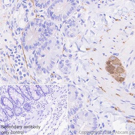 Immunohistochemistry (Formalin/PFA-fixed paraffin-embedded sections) - Anti-4R Tau antibody [EPR21725] (ab218314)
