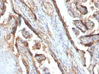 Immunohistochemistry (Formalin/PFA-fixed paraffin-embedded sections) - Anti-Galectin 13/PLAC8 antibody [PP13/1161] (ab218411)