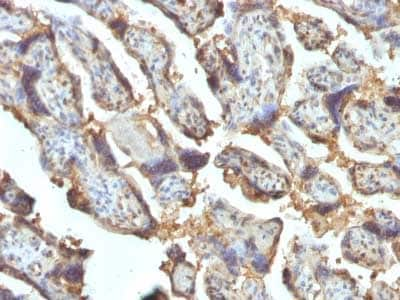 Immunohistochemistry (Formalin/PFA-fixed paraffin-embedded sections) - Anti-Galectin 13/PLAC8 antibody [PP13/1162] (ab218412)