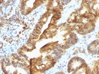 Immunohistochemistry (Formalin/PFA-fixed paraffin-embedded sections) - Anti-TDP2 antibody [TDP2/1258] (ab218476)