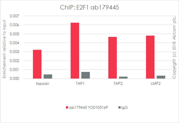 ChIP - Anti-E2F1 antibody [EPR3818(3)] - BSA and Azide free (ab218527)