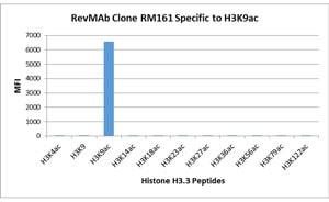 ELISA - Anti-Histone H3 (acetyl K9) antibody [RM161] (ab218553)
