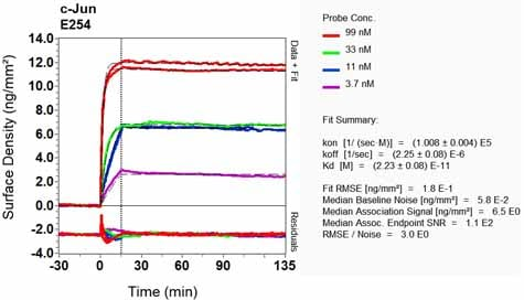 Other - Anti-c-Jun antibody [E254] - BSA and Azide free (ab218576)