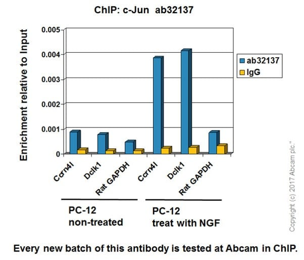 ChIP - Anti-c-Jun antibody [E254] - BSA and Azide free (ab218576)