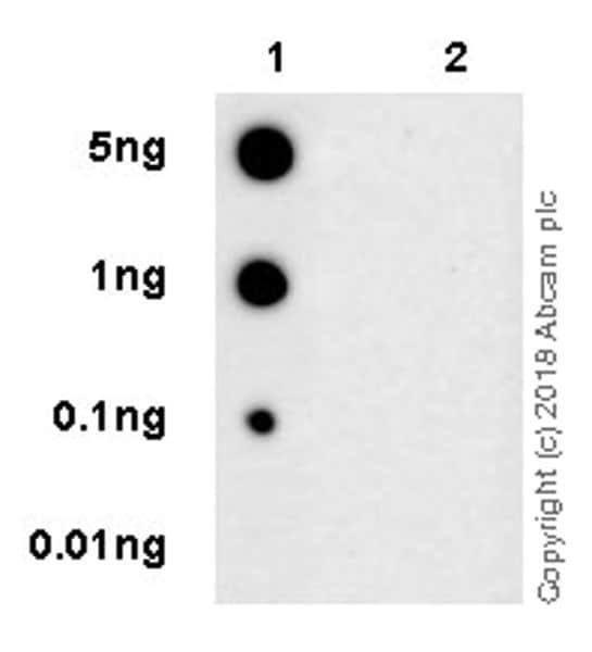 Dot Blot - Anti-p73 (phospho Y99) antibody [EPR21751] (ab218625)