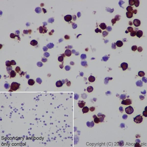 Immunocytochemistry - Anti-CRISPR-Cas9 antibody [EPR19799] - BSA and Azide free (ab218654)