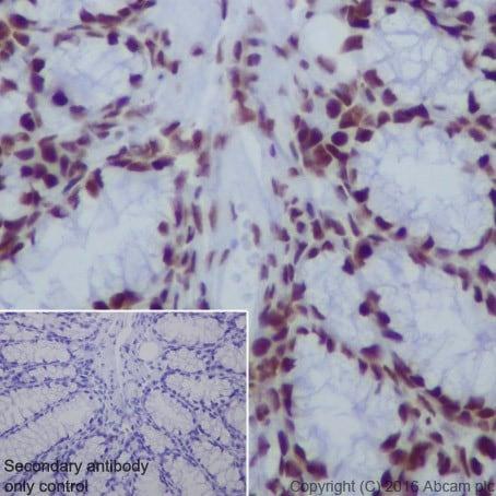 Immunohistochemistry (Formalin/PFA-fixed paraffin-embedded sections) - Anti-HDAC2 antibody [EPR20117] (ab219053)