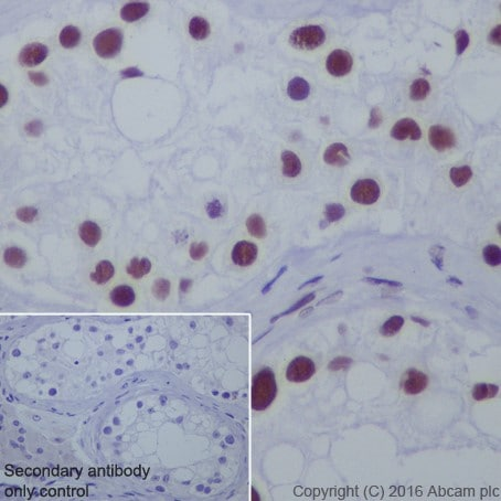 Immunohistochemistry (Formalin/PFA-fixed paraffin-embedded sections) - Anti-HDAC1 + HDAC2 antibody [EPR20327] (ab219054)