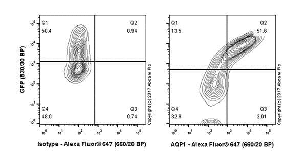 Flow Cytometry - Anti-Aquaporin 1 antibody [EPR20325] (ab219055)