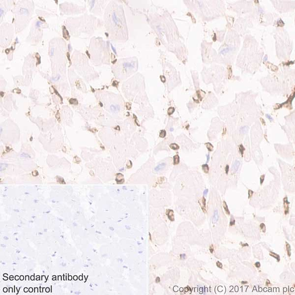 Immunohistochemistry (Formalin/PFA-fixed paraffin-embedded sections) - Anti-Aquaporin 1 antibody [EPR20325] (ab219055)