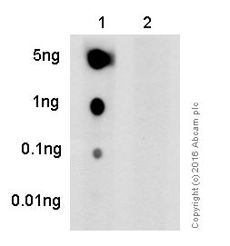 Dot Blot - Anti-Rb (phospho T373) antibody [EP821Y] - BSA and Azide free (ab219158)