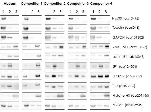 Comparison of HeLa cell fractionation by Nuclear Extract Kit ab219177 and leading commercially available nuclear fractionation kits.