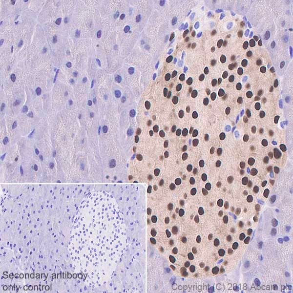 Immunohistochemistry (Formalin/PFA-fixed paraffin-embedded sections) - Anti-PDX1 antibody [EPR22002] (ab219207)
