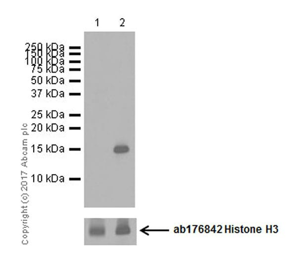 Western blot - Anti-Histone H3 (citrulline R17) antibody [EPR20358-120] (ab219407)