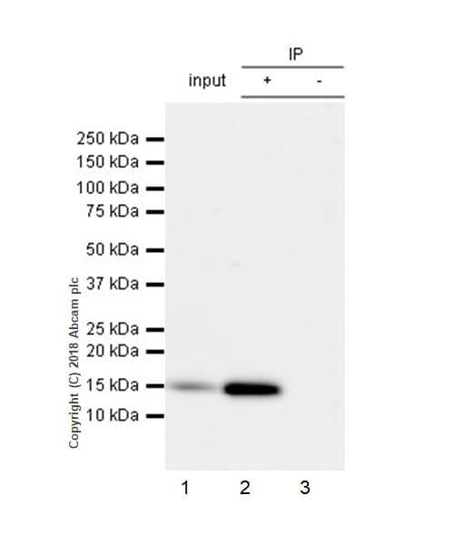 Immunoprecipitation - Anti-Frataxin antibody [EPR21840] (ab219414)