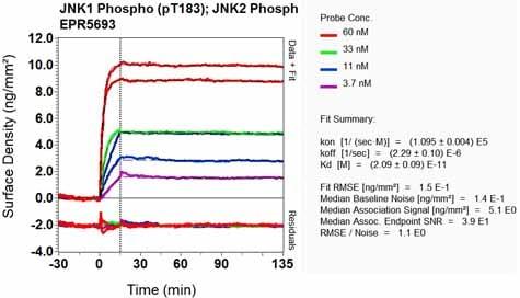 Other - Anti-JNK1 + JNK2 + JNK3 (phospho T183+T183+T221) antibody [EPR5693] - BSA and Azide free (ab219584)