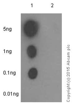 Dot Blot - Anti-JNK1 + JNK2 + JNK3 (phospho T183+T183+T221) antibody [EPR5693] - BSA and Azide free (ab219584)