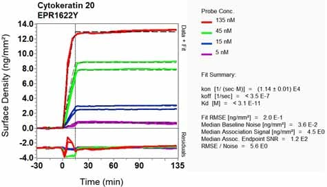 Other - Anti-Cytokeratin 20 antibody [EPR1622Y] - BSA and Azide free (ab219589)