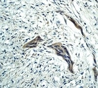 Immunohistochemistry (Formalin/PFA-fixed paraffin-embedded sections) - Anti-Caspase-9 antibody [E23] - BSA and Azide free (ab219590)