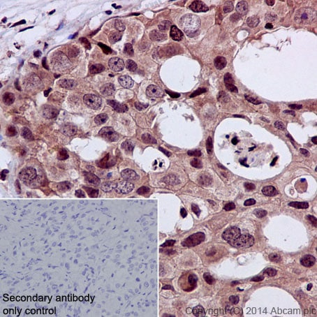 Immunohistochemistry (Formalin/PFA-fixed paraffin-embedded sections) - Anti-STAT5 (phospho Y694) antibody [E208] - BSA and Azide free (ab219607)