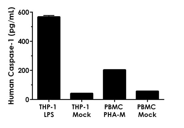 Comparison of Caspase-1 in unstimulated and LPS stimulated THP-1 cell supernatants and unstimulated and PHA-M stimulated PBMC cell supernatants.