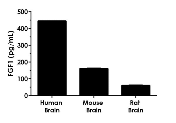 Interpolated concentrations of native FGF1 in human, mouse, and rat brain samples based on 20 µg/mL extract loads for each sample type.