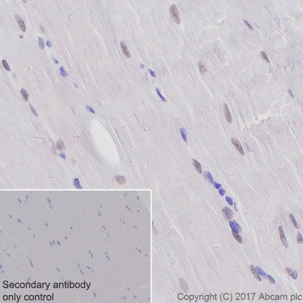 Immunohistochemistry (Formalin/PFA-fixed paraffin-embedded sections) - Anti-TEF1/TEAD-1 antibody [EPR3967(2)] - BSA and Azide free (ab219647)