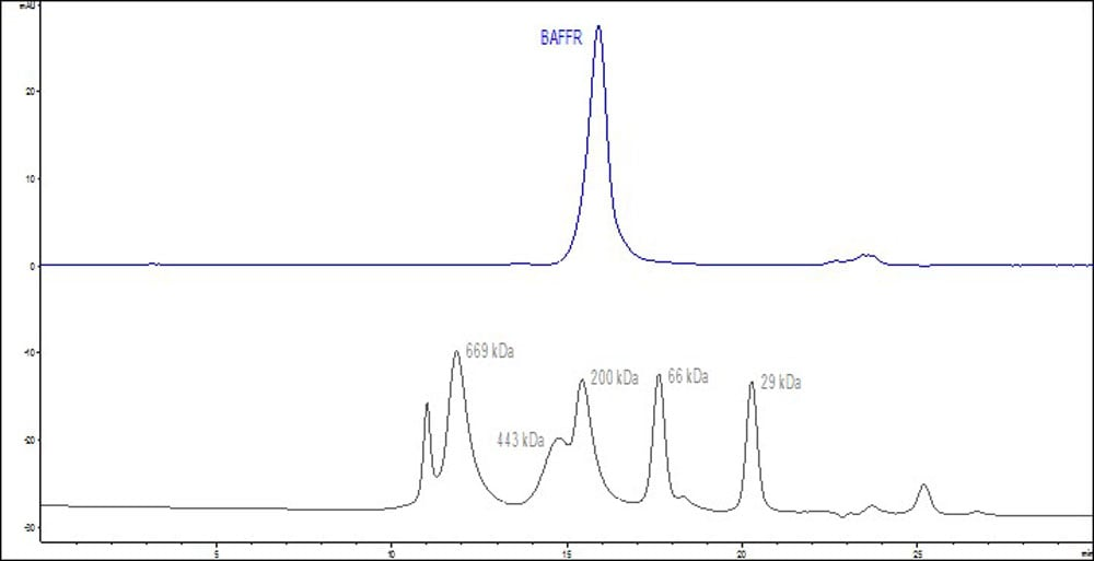 HPLC - Recombinant mouse BAFF-R protein (Active) (ab219672)