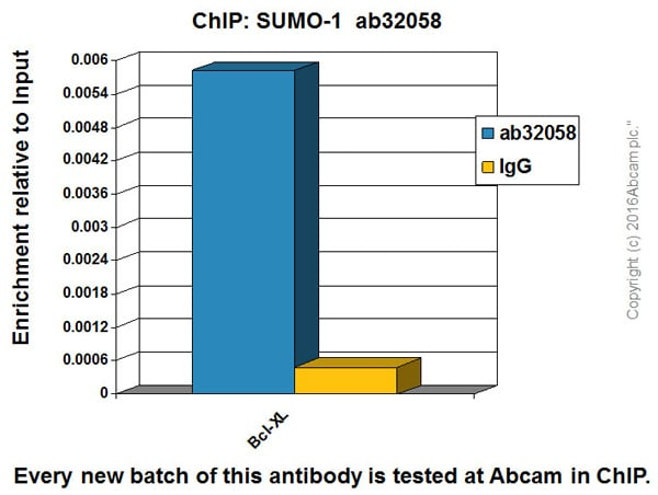 ChIP - Anti-Sumo 1 antibody [Y299] - BSA and Azide free (ab219724)
