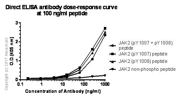 ELISA - Anti-JAK2 (phospho Y1007 + Y1008) antibody [E132] - BSA and Azide free (ab219728)