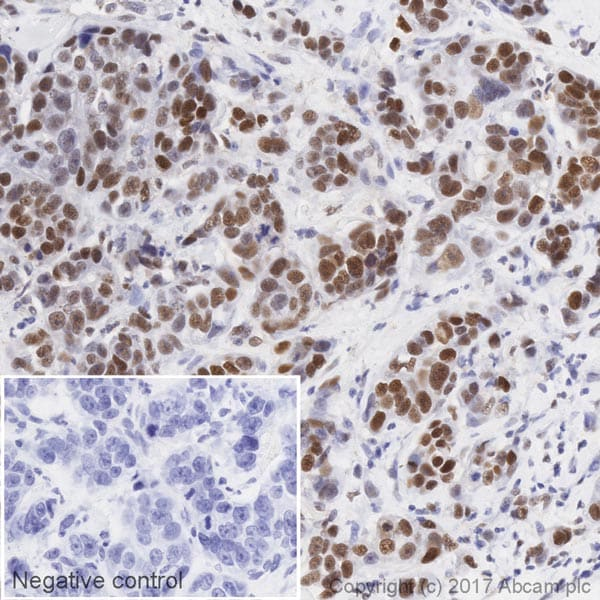 Immunohistochemistry (Formalin/PFA-fixed paraffin-embedded sections) - Anti-CREB antibody [E113] (HRP) (ab219741)