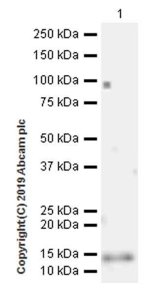 Western blot - Anti-Ly-6A/E antibody [EPR22502-38] (ab219794)