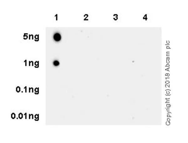 Dot Blot - Anti-Histone H4 (mono methyl R92) antibody [EPR21782] (ab219797)