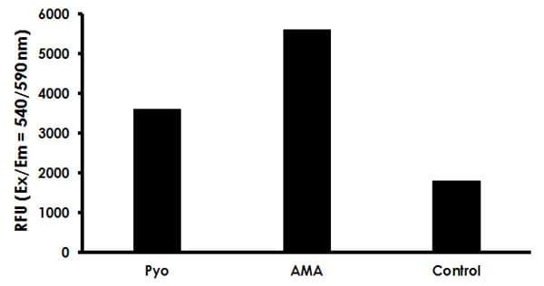 Mitochondrial Superoxide Detection Kit (Fluorometric) (ab219943)
