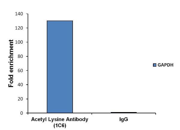 ChIP - Anti-acetyl Lysine antibody [1C6] (ab22550)