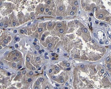 Immunohistochemistry (Formalin/PFA-fixed paraffin-embedded sections) - Anti-Glutathione Peroxidase 1 antibody (ab22604)