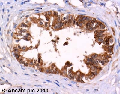 Immunohistochemistry (Formalin/PFA-fixed paraffin-embedded sections) - Anti-Leu Enkephalin antibody (ab22619)