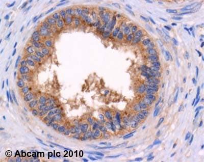 Immunohistochemistry (Formalin/PFA-fixed paraffin-embedded sections) - Anti-Met Enkephalin antibody (ab22620)