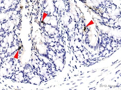 Immunohistochemistry (Formalin/PFA-fixed paraffin-embedded sections) - Anti-Peptide YY/PYY antibody (ab22663)