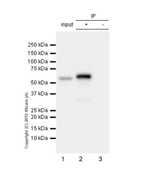 Immunoprecipitation - Anti-SMARCD2 antibody [EPR20860-251] (ab220164)